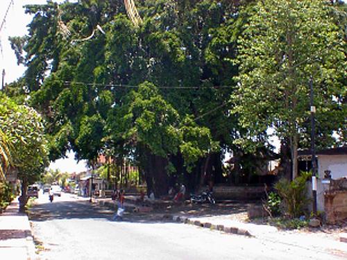 渋滞になる前のバンヤンの木.jpg